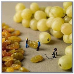Grapes & Raisins